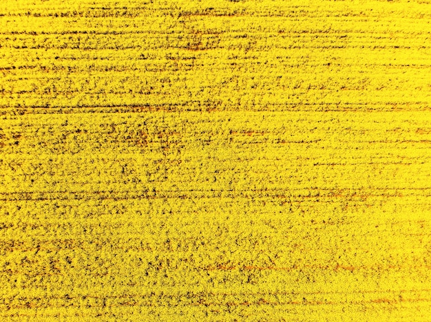 Blooming rapeseed  background image, photo from drona