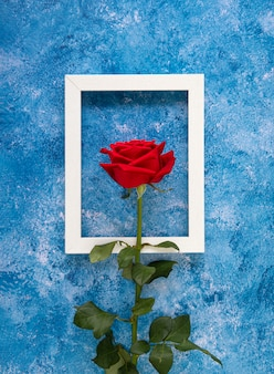 Blooming red rose in front of a white wooden frame