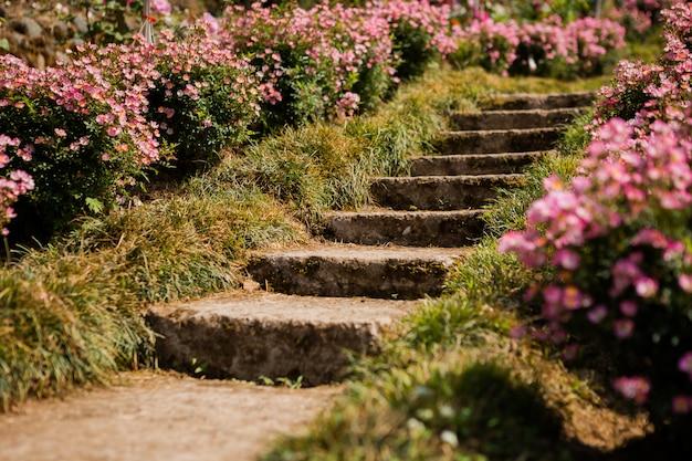 夏に咲くバラ園。ブルーミングガーデンのステップ。植物園、バトゥミ、ジョージア州