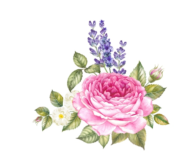 Blooming rose watercolor illustration.