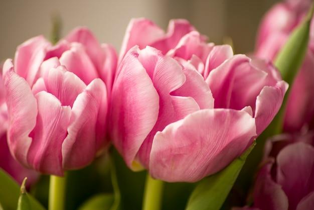 日光の下で咲く春の花のチューリップ。はがきの美しさの装飾と農業の概念設計のための冬または春の日のチューリップ畑の緑の葉の背景を持つチューリップの花。