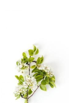 白い壁、花のフレーム、上面図、フラットなレイアウトに咲く春梨の枝。春のコンセプトです。縦の写真