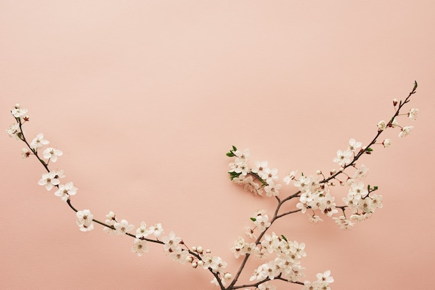Blooming tree branch on pink background