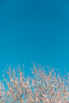 Blooming tree and clear sky with copy-space