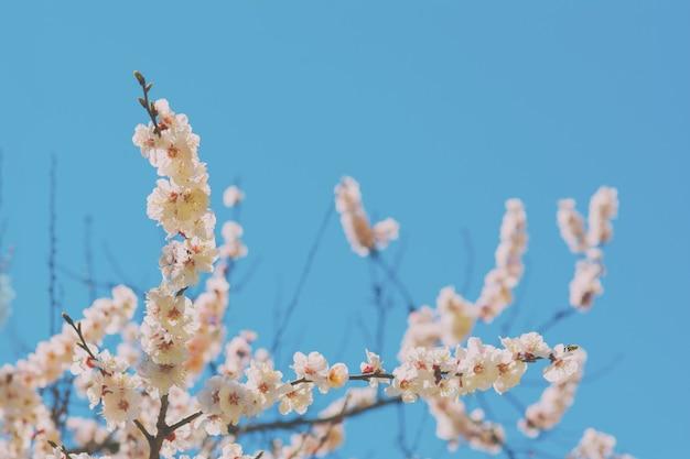 푸른 하늘 배경에 피는 나무