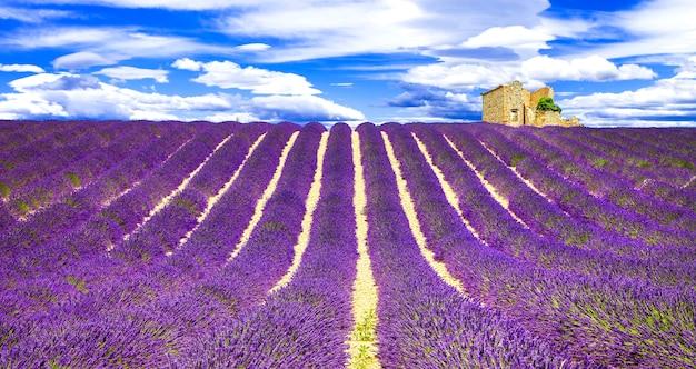 プロヴァンスのラベンダーの咲く紫の感触