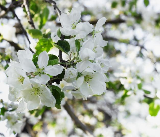 피는 흰 꽃 배경
