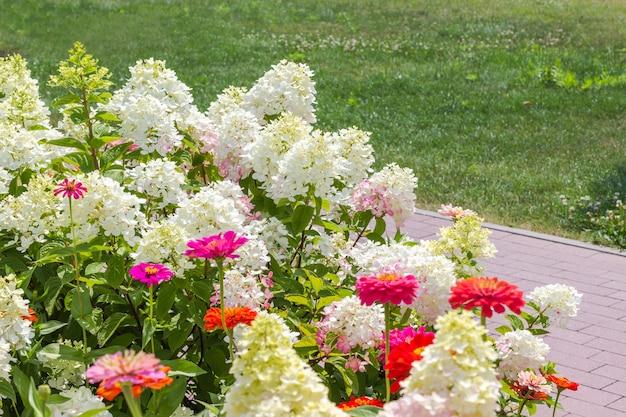 公園の緑の草の中に咲く白いアジサイと赤い百日草。