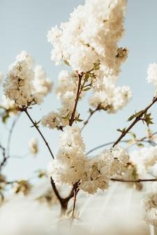 咲く白いライラックの花の茂み。自然な夏の花の構成