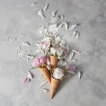 Blooming white and pink pions, buds, green leaf in a wafer cones with petals on a gray stone background,