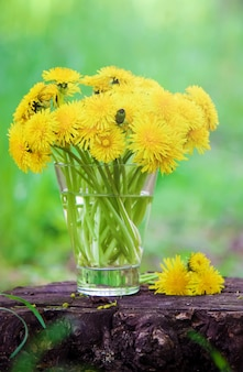 Blooming yellow dandelions in the bouquet. selective focus.