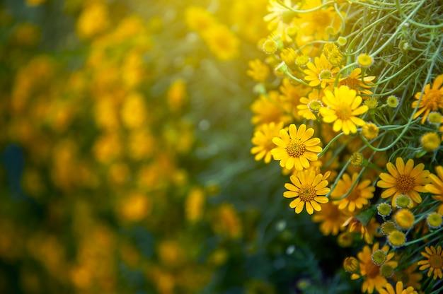 Blooming yellow flower in the flora garden.