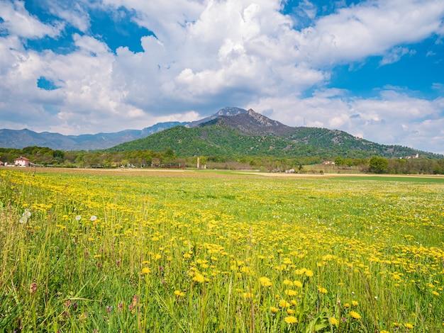 田園風景の背景に咲く黄色い花