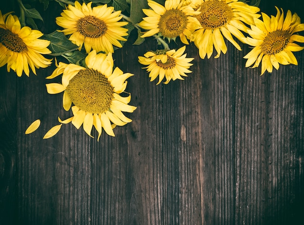 Blooming yellow sunflowers on a brown wooden surface
