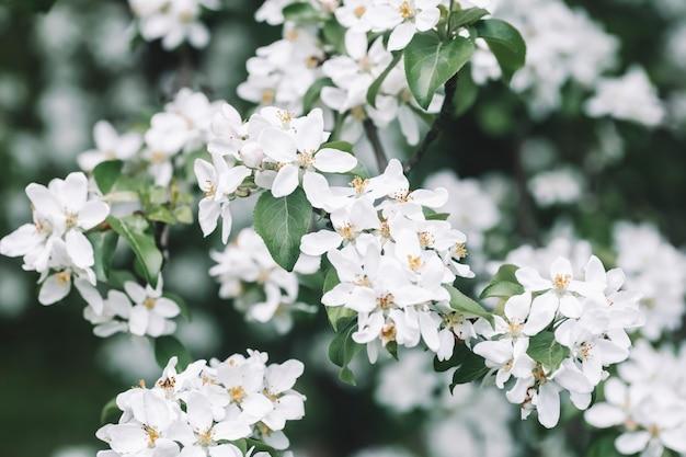 꽃 사과 나무 봄 배경 화창한 봄 하늘을 배경으로 봄에 피는 나무 고품질 사진