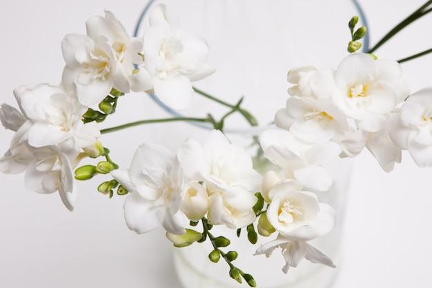 밝은 배경에 꽃병에 흰 난초의 꽃 배경을 닫습니다. floristics 예술, 장식의 부드러움과 순결, 고급 선물 개념