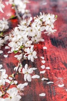 Blossom branch of cherry tree