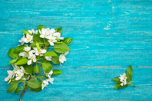 Blossom branch on turquoise wood background