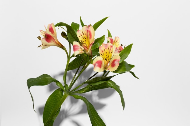 花の花の上面図
