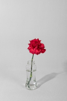 Fiore del fiore in vaso sul tavolo