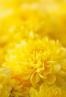 黄色いお母さんや菊の花。