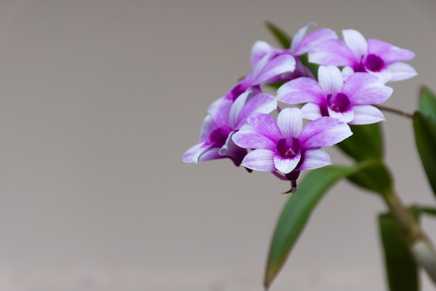 Blossom orchids