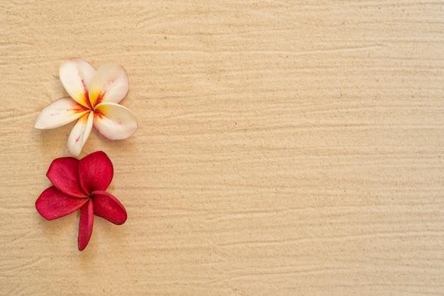 모래 해변 배경에 꽃 plumeria