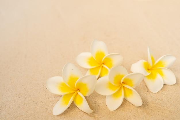 Blossom plumeria on sand beach background