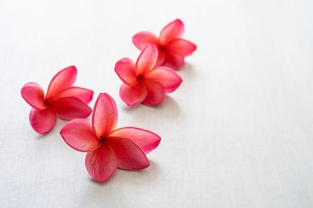 Цветок plumeria цветения красный на белой таблице.