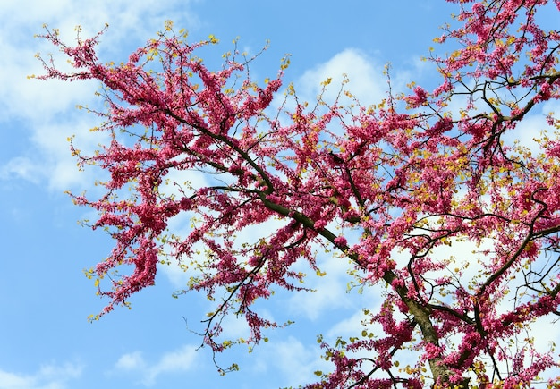 푸른 하늘에 붉은 꽃과 꽃 나무