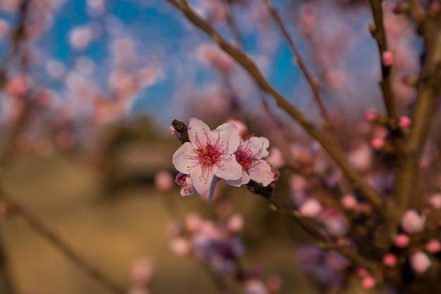 自然の上の花の木