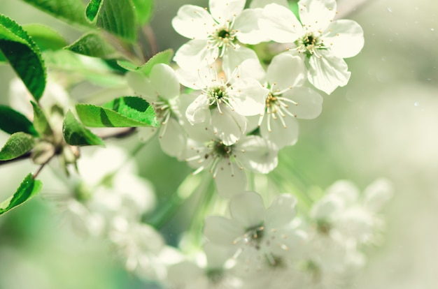 Blossom tree, spring nature background. sunny day. easter and blooming concept.