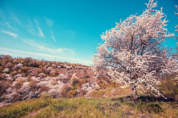 Цветут деревья на холмах ранней весной. природный ландшафт