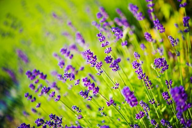 Blossom wildflowers