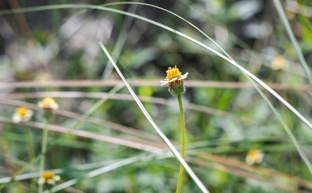 정글에서 꽃이 만발한 야생 꽃은 흐릿한 배경으로 닫힙니다.