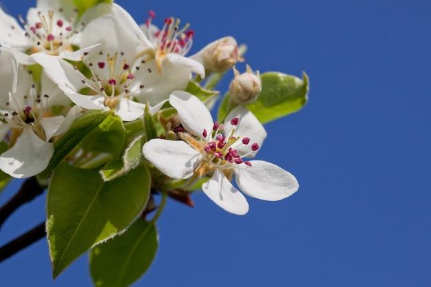 봄 벚꽃이 만발하다