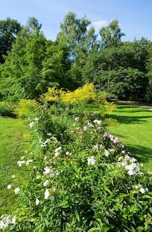夏の都市公園で白い花と花の茂み