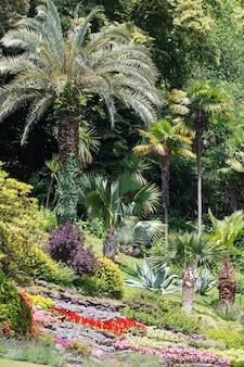 夏の都市公園に咲く色とりどりの花壇とヤシの木