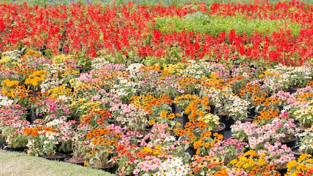 Blossoming colorful flowerbeds in the park.