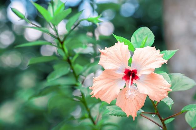 숲의 꽃잎에 이슬이 꽃이 만발한 꽃.