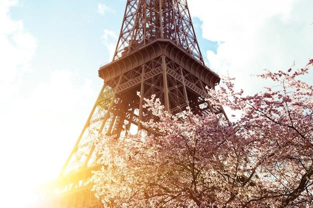 エッフェル塔を背景に開花するマグノリア