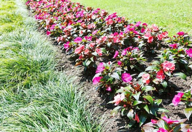 ピンクの花と花の咲く植物(自然の背景)