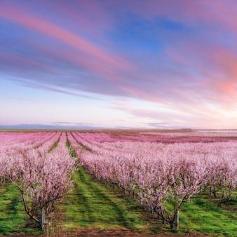 Blossoming tree garden