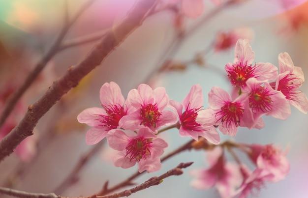 春の庭に咲く木。