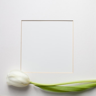 Blossoming white tulip flowers and a paper card on white background
