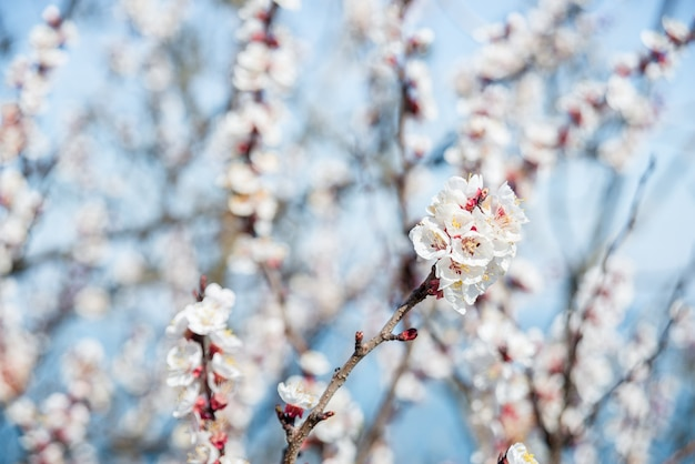 흐리게 자연 배경 위에 꽃입니다. 밝은 파란색 bokeh와 봄 배경