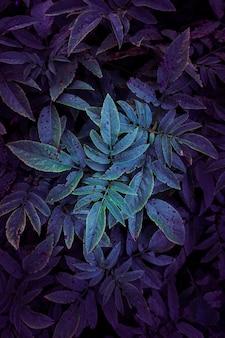파란색과 보라색 식물 잎 배경