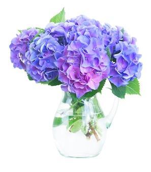 白で隔離のガラスの花瓶の青と紫のオルテンシア生花