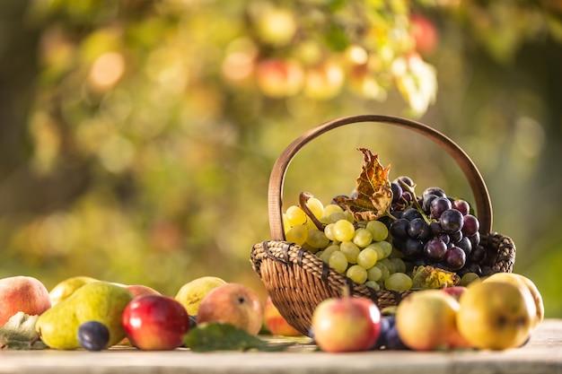 다른 과일과 함께 나무 테이블에 나무 바구니에 파란색과 흰색 포도.