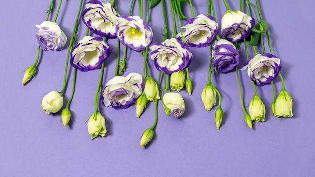 紫の背景に青と白のトルコギキョウの花。フラットレイ、上面図。